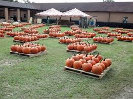 Pumpkin Patch Homer Glen Il by 235 Best Pumpkin Patch Images On Pinterest Pumpkin Patches