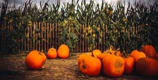 Wow Brackwell Pumpkin Patch Location by Map Pumpkin Festivals Pumpkin Patches And Pick Your Own