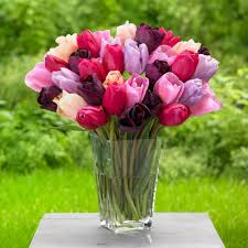 tulip annual assorted colors flower bulbs garden plants