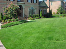 Carpet Grass Florida by Zenith Zoysia Seed All About Zenith Zoysia Grass Planting Zenith