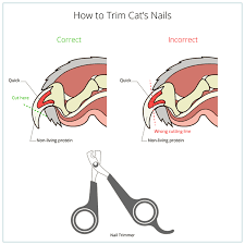 how to cut a cats nails how to cut cat nail veterinary animals and pets