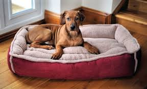 Petco Dog Beds by Large Dog Beds Petco Bed Home Design Ideas Kxp9mempko