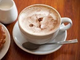 Coffee Latte Cappuccino Espresso Cafe Au Lait Wiener Melange White Milk