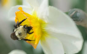 don t plant poisoned bulbs the telegraph