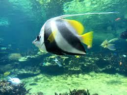 aquarium geant a visiter belgique plus de 25 idées uniques dans la catégorie nausicaa aquarium sur