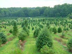 Christmas Tree Farm In Perry Hall MD Summer