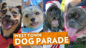 Tompkins Square Park Halloween Dog Parade Winner by Dogs On Parade Scenes From West Town U0027s Cutest Summer Fest Youtube