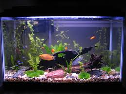 Star Wars Fish Tank Decorations by Freshwater Fish Tank Plant Care Setting Up A Fish Tank With Live