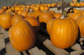 Pumpkin Patch Killeen Tx by Our 2015 Guide To Fall Festivals And Halloween Midland Reporter