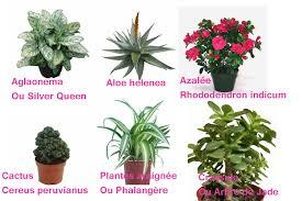plante d駱olluante bureau plantes d intérieur dépolluantes des enduits en terre et en