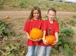 Las Cruces Pumpkin Patch Maze by The Land Of Enchantment And Enchiladas Corn Maze Craze