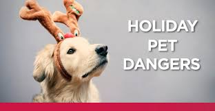 Are Christmas Tree Needles Toxic To Dogs by Top 5 Holiday Dangers To Pets