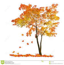 Red maple tree clipart png