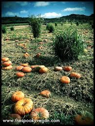 Tanaka Farms Pumpkin Patch by The Spooky Vegan Tanaka Farms Pumpkin Patch 2016 Visit