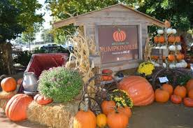 Pumpkin Patches In Okc by Great Pumpkins Take The Family On A Trip To Pumpkinville At