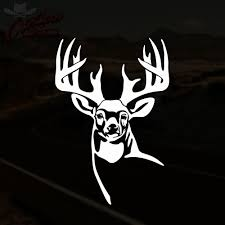 Truck Decals Whitetail Deer Decal Buck Hunting Truck Window Vinyl ... Amazoncom Buck Commander Deer Vinyl Die Cut Decal Sticker 6 White Browning Head Car Window 5 Duck Fish Truck Doe Etsy Hunting Hunter Funny Camel Its Hunt Day Wednesday Parody Turkey Duck And Fishing Hook Vinyl Decal Sticker Realtree Xtra Camo Antler Windows Decals Automobiles Motorcycles Exterior Accsories Stickers 27 Wall For Style Pink Family Decalsticker For Cars Walls Huntemup Moose Or 4x3