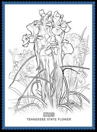 Tennessee State Flower Coloring Page