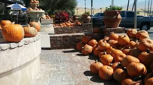 Pumpkin Patches In Bakersfield Ca by Napkins Murray Family Farms Bakersfield Ca Picture Of Murray