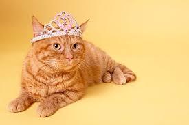 orange cat names 15 punniest cat names lovetoknow