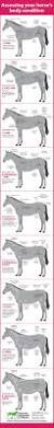 Best Horse Shedding Blade by 489 Best Horse Need To Know Images On Pinterest Horse Tips