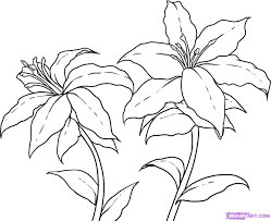 How To Draw Lilies Step By Flowers Pop Culture FREE