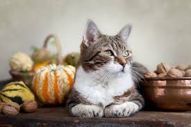 Canned Pumpkin For Dog Constipation by Thanksgiving Foods Pets Can Eat And Ones To Avoid