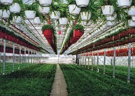 Green Story Petitti Garden Center