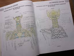 Ordinary Musculoskeletal Anatomy Coloring Book Page 3