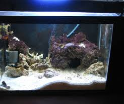 Extra Large Aquarium Ornaments by How To Setup And Build A Self Contained Saltwater Aquarium With