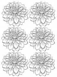 Coloring Adult Six Dahlia Flower