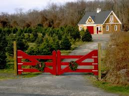 24×36 Christmas Tree Barn | Barn, Christmas Tree And Farming Red Barn In Arkansas Red Hot Passion Pinterest Barns New Mexico Medical Cannabis Sales Up 56 Percent Patients 74 Barnhouse Country Stock Photo 50800921 Shutterstock Rowleys Barn Home Of Spoon Interactive Childrens Dicated On Opening Day Latest Img_20170302_162810 Growers Redbarn Wet Cat Food Two Go Tiki Touring Black Market The Original Choppers By Redbarn 100 Natural Baked Beef Chews For Dogs Meet The Team Checking Out Santaquin Utah Bully Stick