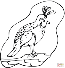 Click The California Quail Coloring