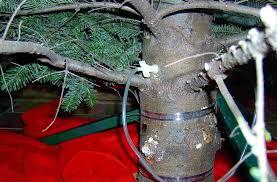 Xmas Tree Waterer by O Tannenbaum U2013 The Garden Professors