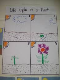 Life Cycle Of A Pumpkin Seed Worksheet by Change This To Water Cycle For 4th Grade Crafts For