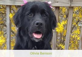 benson animal hospital byram animal hospital veterinary needs of pets sussex morris
