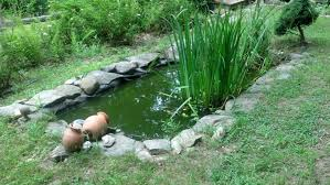 Backyard Frog Pond | Frogs Are Green Ohios 15 Species Of Frogs And Toads At A Glance Trekohio 13 Illinois Toads Frogs Midwestern Plants A Container Pond To Host Fish I Want Make One With How Raise Pictures Wikihow Utah Division Wildlife Rources Focus On Long Legged Cute Sitting Couple Cartoon Style Garden The Frog Pond Coach Michele Motorbike Frog Wikipedia Shop 145in Statue Lowescom