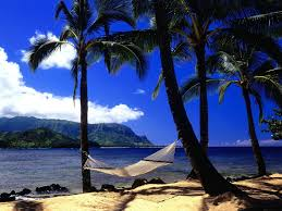 Hammock Palm trees Coast Beach HD wallpaper