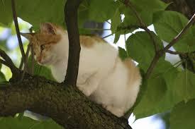 répulsif pour chat comment faire un répulsif naturel pour chat
