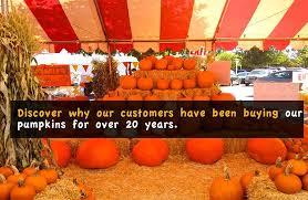 Pumpkin Patches Near Temple Texas by Pasadena Pumpkin Patch Serving Pasadena Since 1992
