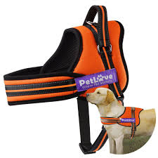 The 8 Best Dog Leashes To Buy In 2017 Do Female Dogs Get Periods How Often And Long Does The Period Dsc3763jpg The Best Retractable Dog Leash In 2017 Top 5 Leashes Compared Please Fence Me In Westward Ho To Seattle Traing Talk Teaching Your Come When Called Steemit For Outside December Pet Collars Chains At Ace Hdware Biglarge Reviews Buyers Guide Amazoncom 10 Foot With Padded Handle For Itt A Long Term Version Of I Found A Rabbit Wat Do
