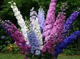 Bilder Fã R Kã Che Bei Pflanzen Bloomgreen Co Und Andere Gartenausstattung Für