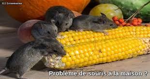 exterminateur de souris 100 garanti avez vous un problème de