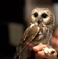 Their Name Makes Them Sound Like Bad Pets, But God Damn Screech ... 55 Best Owl Images On Pinterest Barn Owls Children And Hunting Owls How To Feed Keep An Owlet Maya A Brief Introduction The Common Types Of Six Reasons Why You Dont Want An Owl As Pet Bird Introducing Gizmo Baby Whitefaced Youtube 2270 Animals 637 Oh Meine Uhus I Love Owls My Barn Cat Baby By Disneyqueen1 Deviantart All Things Nighttime Predator Cute Animals