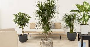 heizungsluft pflanzen feinde werden freunde olerum