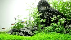 White Sky Iwagumi - YouTube The Green Machine Aquascaping Shop Aquarium Plants Supplies Photo Collection Aquascape 219 Wallpaper F Amp 252r Of The Month October 2009 Little Hill Wallpapers Aquarium Beautify Your Home With Unique Designs Design Layout New Suitable Plants Aquariums Pinterest Pics Truly Inspired Kinds Ornamental Aquascaping Martino Agostini Timelapse Larbre En Mousse Hd Youtube Beauty Of Inside Water Garden Inspirationseekcom Grass Flowers Beautiful Background