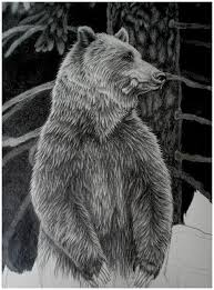 Graphite Drawing Of Momma Bear First In A Three Picture Series Bears