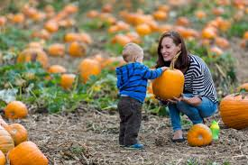 Pumpkin Patch Lafayette La 2017 by Fall Fun Guide Central Indiana Fall Festivals Pumpkin Patches