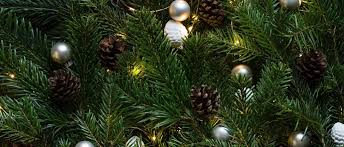 Christmas Trees Types by Different Types Of Christmas Trees Useful Pros Cons U0026 Tips