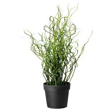 Pot Plants For The Bathroom by Fejka Artificial Potted Plant Corkscrew Rush 10 Cm Ikea