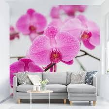 fototapete orchidee kaufen bilderwelten